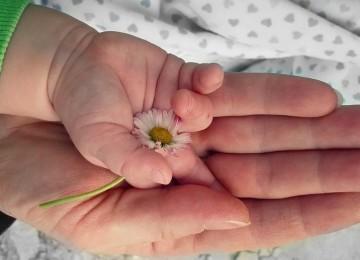 Материнский капитал матерям-одиночкам 2020 – может ли получить